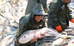 24h qua ảnh: Nông dân thu hoạch cá mùa đông ở Trung Quốc
