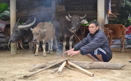 Người dân miền núi đốt lửa sưởi ấm cho trâu, bò những ngày rét đậm