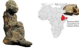 """Xác ướp không phải con người tiết lộ """"đất châu báu"""" đầy vàng 3.000 năm"""