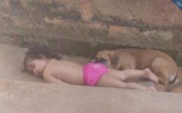 Con gái đang chơi với bầy chó bỗng im bặt, bố mẹ lo lắng đi kiểm tra thì thấy đứa trẻ nằm sấp dưới đất, tiến lại gần liền bật cười