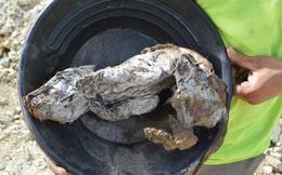 Xác con chó sói 57.000 năm tuổi nguyên vẹn trong lớp băng