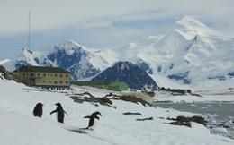 Nam Cực xuất hiện ca nhiễm Covid-19: 'Thành trì' cuối cùng trên thế giới chưa bị đại dịch tấn công đã sụp đổ