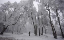 24h qua ảnh: Người đàn ông đi dạo dưới tuyết phủ trắng ở Hungary
