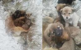 Chó mẹ ủ ấm cho đàn con đến khi chết cóng giữa bão tuyết, 7 chú chó con quyết không rời mẹ lại càng khiến người ta đau lòng