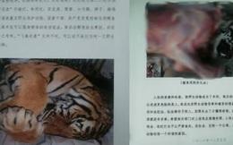 Núp bóng bảo trợ để kinh doanh động vật quý hiếm, một trung tâm ở Trung Quốc bán lông hổ giá... 2,5 tỷ đồng