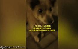 Video: Được người lạ cho ăn, chú chó rơi nước mắt biết ơn