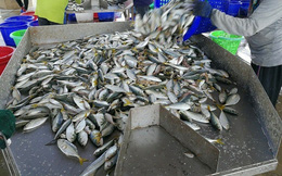 Lào cấm nhập khẩu hải sản từ Thái Lan