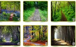 Bạn sẽ chọn đi trên con đường rừng nào? Phía trước con đường đầy cây xanh ẩn chứa nhiều điều thú vị