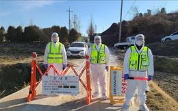 Hàn Quốc cấm ra vào các trại gia cầm trong 24h để chống dịch cúm độc lực cao