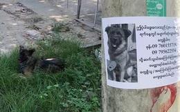 Boss có IQ vô cực: Thấy chân dung in trên tờ rơi tìm chó đi lạc giống mình, bèn ngồi cạnh ung dung chờ sen đến đón