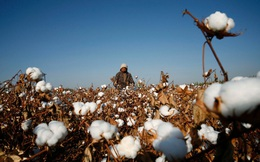 Mỹ cấm nhập bông từ Trung Quốc