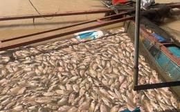 Hơn 800 tấn cá thiệt hại, một người dân mất tích do mưa lũ ở Đắk Lắk