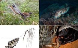 1001 thắc mắc: Những loài vật nào sở hữu 'siêu năng lực' đáng sợ nhất hành tinh?