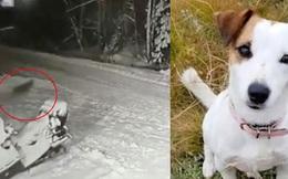 Chơi trốn tìm trước nhà, bé trai gặp họa kinh hoàng nhưng thoát chết nhờ chú cún cưng, kết cục lại quá đỗi xót xa
