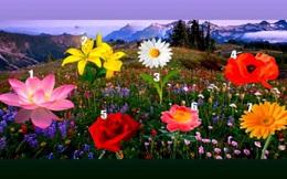 Trước thềm năm mới, hãy chọn một bông hoa để xem ước mơ của bạn trong năm 2021 có thành hiện thực không