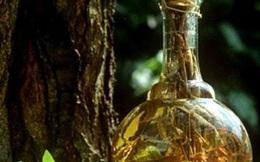 Rượu thuốc chữa đau lưng, tăng cường sinh lực