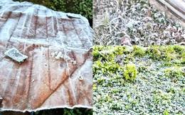 Lớp băng phủ trắng mái nhà, cây cỏ ở vùng núi Nghệ An