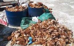 Gần 30 bì gà chết vứt tràn lan dọc bờ biển
