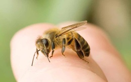 Bị 1 con ong đốt, người phụ nữ rơi vào tình trạng nguy kịch chỉ sau 10 phút
