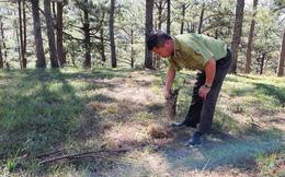 Thủ đoạn tinh vi cưa hạ, 'phi tang' 31 cây rừng phòng hộ ở Đà Lạt