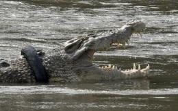 24h qua ảnh: Cá sấu khổng lồ bị kẹt cổ trong lốp xe