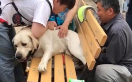 """Chú chó bị mắc kẹt ở chiếc ghế công viên vì thân hình béo ịch và hành trình giải cứu """"thấy cũng tội mà thôi cũng kệ"""""""