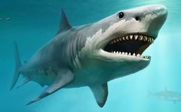 Dạ dày cá mập trắng tiết lộ sự thật về món ăn khoái khẩu của 'hung thần biển khơi'