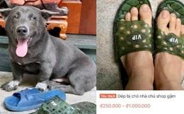 Đôi dép bị chú chó idol Nguyễn Văn Dúi gặm nham nhở bất ngờ được rao bán online, nhìn số lượng hàng được bán ra mà choáng!