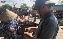 Giá lợn hơi giữ ở mức cao, thương lái lỗ nặng