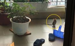 Trời nắng đẹp ngó ra ban công, chàng trai giật mình khi thấy chú chuột đứng 2 chân, nhìn chằm chằm như muốn nói chuyện