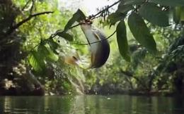 Thiên nhiên kỳ thú: Loài cá tung mình lên khỏi mặt nước hái trái cây