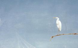 Chẳng may nuốt phải 1 cái lông chim, người đàn ông gặp ngay vận xui sau đó vài ngày