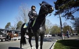 Lực lượng kỵ binh trong thế giới hiện đại