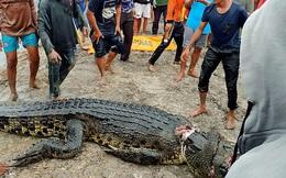 Mổ bụng cá sấu khổng lồ dài gần 6m, dân làng phát hoảng khi nhìn thấy cảnh tượng bên trong