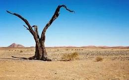 Đi tìm kho báu trên sa mạc rộng lớn bỗng gặp một nhóm người lạ mặt, bạn sẽ làm gì? Câu trả lời sẽ tiết lộ tính cách của bạn