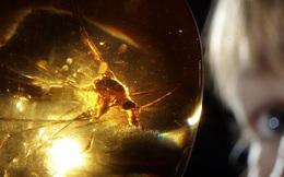 Thí nghiệm 'công viên kỷ Jura' sẽ ra sao nếu thay khủng long bằng muỗi?