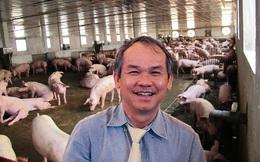 Sau đàn bò nghìn tỷ, bầu Đức sắp chuyển sang nuôi lợn?