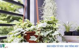 10 loại cây giúp không khí nhà bạn trong lành hơn