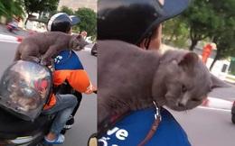 Shipper chở mèo trên phố, biểu cảm của con vật ngồi trên ba lô khiến người đi đường bật cười