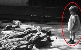 Cảnh tượng đàn cá sấu chực chờ tấn công đứa trẻ nhìn thôi cũng rùng mình và sự thật không tưởng phía sau