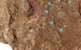 Phát hiện hóa thạch trứng khủng long nhỏ nhất thế giới tại Nhật Bản