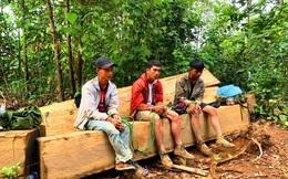 Hành trình bắt nhóm lâm tặc phá rừng trăm tuổi