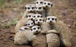 1001 thắc mắc: Loài vật nào tàn nhẫn nhất thế giới?