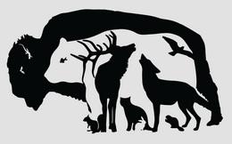 Phải rất tinh mắt, tưởng tượng phong phú mới nhìn thấy 12 con vật trong hình này!