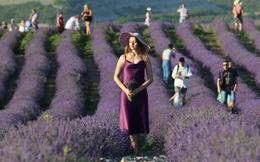 24h qua ảnh: Cô gái thả hồn trên cánh đồng oải hương ở Nga