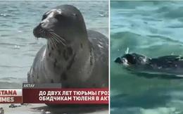 Video: Du khách đánh hải cẩu đến bất tỉnh để... chụp ảnh cho vui