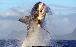 7 ngày qua ảnh: Cá mập khổng lồ lao khỏi mặt nước khi săn mồi