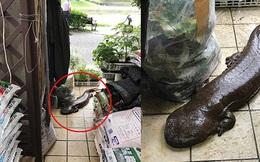 """Đến tận cửa hỏi thăm nhà dân sau trận mưa lớn, chú cá kỳ lạ khiến dân mạng tranh cãi: """"Đây là cá trê đại bự phiên bản mọc chân?"""""""