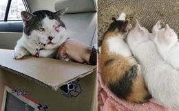 """Chú mèo bỏ nhà đi 5 ngày rồi trở về mình đầy thương tích, bỗng dưng đem theo cả vợ con khiến dân tình tưởng """"Vợ nhặt"""" phiên bản mèo"""