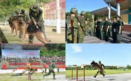 Chó nghiệp vụ Biên phòng Việt Nam sẽ thi tài tại Army Games 2020